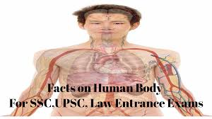 Human Anatomy Exam Questions Human Body Facts And Diseases Based Questions Ssc Exam Preparation