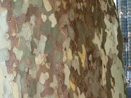 s veg plot the camouflage tree