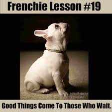 Birthday Meme Tumblr - birthday meme bulldog 4birthday info