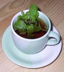 Teh Mint manfaat daun mint dan teh hijau untuk diet griya hidroponikku