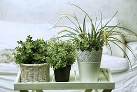 plante dans la chambre 6 plantes à mettre dans votre chambre pour combattre l insomnie