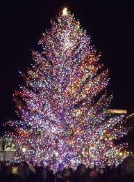 outdoor tree with lights white trees in urns