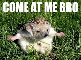 Animal Meme - the 20 funniest animal memes
