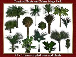 second marketplace stock clearance sale 90 x tropical palms