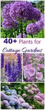 best 25 natural landscaping ideas on pinterest garden in the