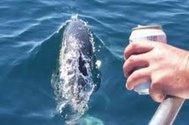 Seeking Dolphin Dolphin Seeking At Scubies On Chamuel Boat Trips Picture Of