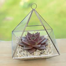 geometric glass vase succulent terrarium by dingading terrariums