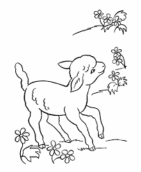 sheep coloring pages flowers coloringstar