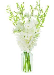 white dendrobium orchids white dendrobium orchid bouquet 10 stems