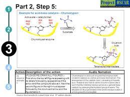 enzymes catalytic strategies u0026 regulatory mechanisms ppt download