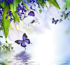 flowers flowers butterflies white tulips water blossom reflection