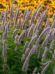 Rock Garden Perennials by What Is A Perennial Diy