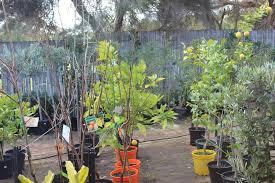garden centre melbourne pots galore
