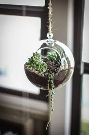 side project make your own succulent terrarium u0026 planter