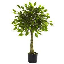 best 25 ficus tree ideas on ficus tree indoor ficus