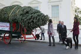 the 2014 white house christmas tree has arrived