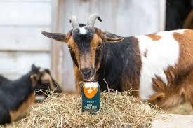 farmer willie u0027s craft ginger beer
