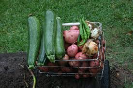 three fall vegetable gardening programs to be offered in san