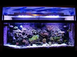 led aquarium lights for reef tanks diy how to build an led reef tank light with controller youtube