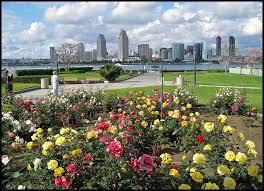 san diego flowers my birthplace san diego ca and they re a gift by