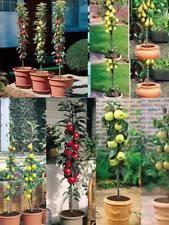apple plant trees ebay