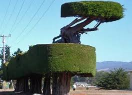 Topiaries Plants - 39 best topiary images on pinterest topiaries garden ideas and