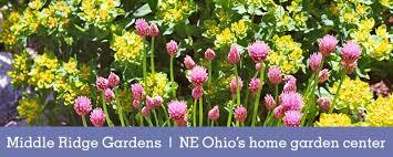nursery garden center annuals perennials edibles
