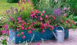 Summer Container Garden Ideas Alan Titchmarsh On Colourful Garden Plant Containers Garden