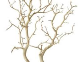 manzanita branch manzanita branches etsy