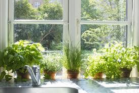 garden more design indoor herbs garden ideas as one of the