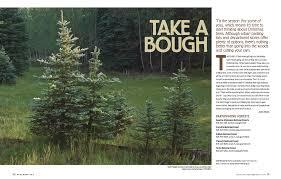 christmas tree permits arizona highways