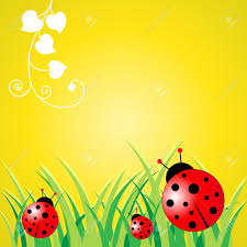 ladybird stock photos royalty free ladybird images and pictures