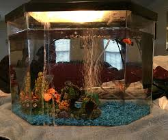 How To Clean Fish Tank Decorations How To Clean Your Small Fish Tank 7 Steps With Pictures
