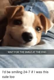 Dog Smiling Meme - wait for the smile at the end i d be smiling 24 7 if i was this cute