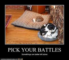 Cats In Dog Beds Pick Your Battles Cat Vs Dog Animal And Cat