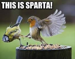 Meme Bird - bird memes home facebook