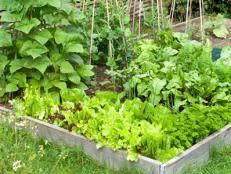 Raised Beds For Gardening Tips For A Raised Bed Vegetable Garden Hgtv
