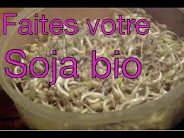 comment cuisiner les pousses de soja faire du soja bio