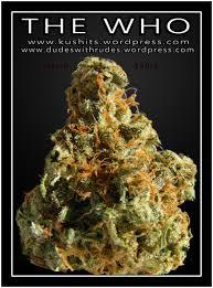 Weed Maps San Diego by Medical Marijuana Kushits Photo Blog