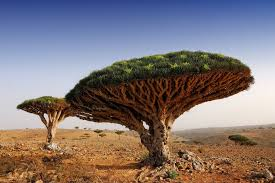 the 26 most beautiful trees you ll see