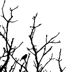 bird in tree silhouette free stock photo domain pictures