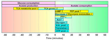 metabolites free full text physiological and molecular timing