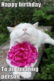 Cat Happy Birthday Meme - 20 adorbs happy birthday cat memes sayingimages com