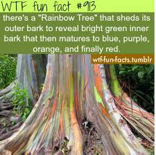 130 best facts images on random facts