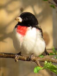 still life with birder a few yard birds