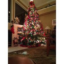 dave u0027s christmas tree lot in brandon fl 813 843 8
