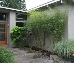 bamboo landscaping as a plant u2014 porch and landscape ideas