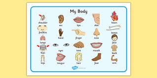 eal my body primary resources eal my body page 1