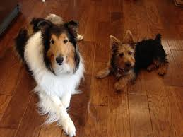 Barrie House Pet Sitter House Sitter Needed For 1 Week In Barrie Barrie