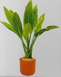 amazon black friday adelaide terracotta pot plants currently available aquarium fish paradise
